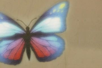 sommerfugl_002